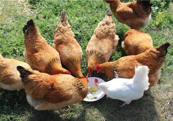 Кучинские юбилейные лакомятся яйцом.