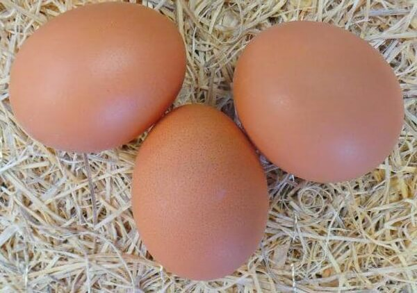 Крупные яйца, фото в натуральную величину.