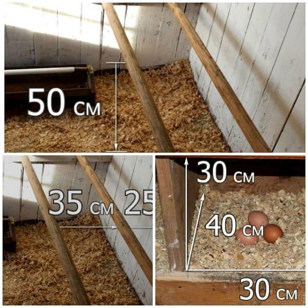 Высота и ширина насестов и гнезда для куриц.