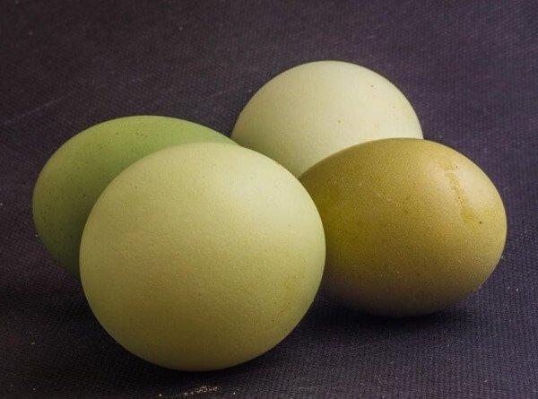Яйца кур породы Синь Синь Дянь.