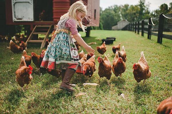 Девочка кормит курочек.