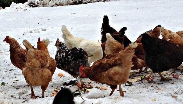 Витаминные корма зимой.