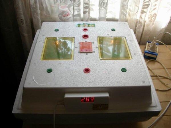 Инструкция по выведению цыплят в инкубаторе