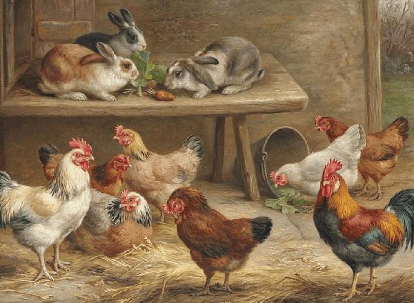 Мясо-яичные породы кур и кролики.