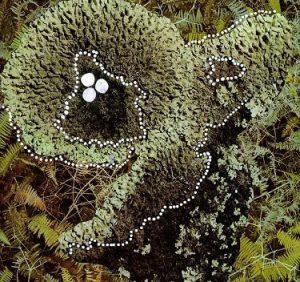 Микотоксины под микроскопом.