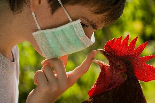 Опасен ли для человека птичий грипп?