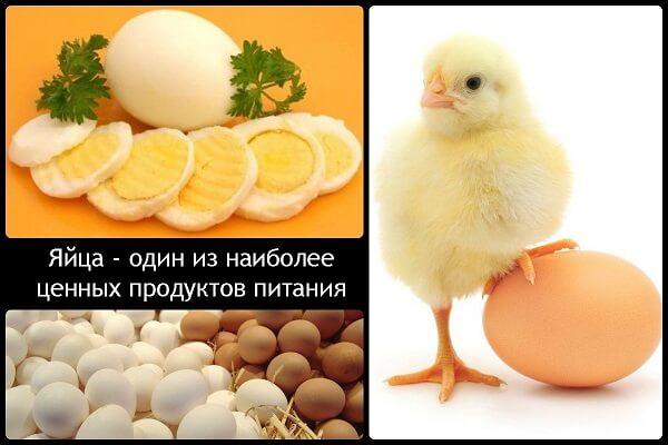 Улучшение качества куриных яиц питанием и витаминами.