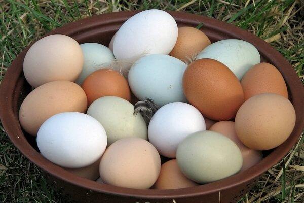 Куриные яйца разных окрасов скорлупы.