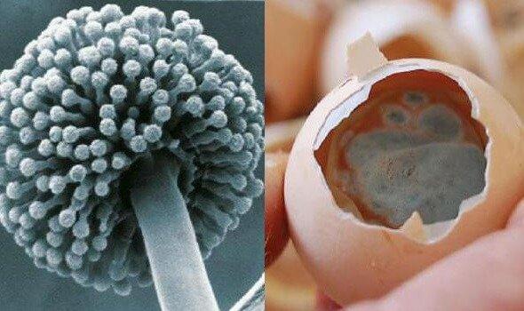 Аспергиллез птиц – лечение и профилактика заболевания