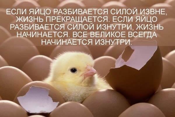 Пропойка цыплят бройлеров с первых дней жизни.