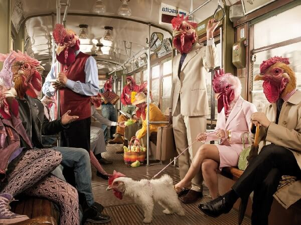 Смешное фото Люди-Куры.