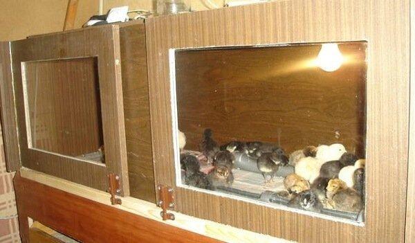 Брудер для цыплят - изготовление 17