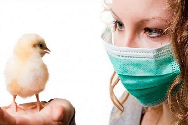 Метапневмовирус у птиц и вакцинация живыми вакцинами.