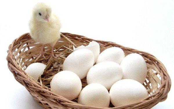 Топ-10 интересных фактов о куриных яйцах, которых вы не знали.