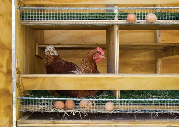 Двухярусные гнезда с яйцесборником.