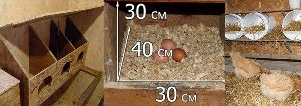 Как сделать гнезда для кур-несушек своими руками фото и размеры.