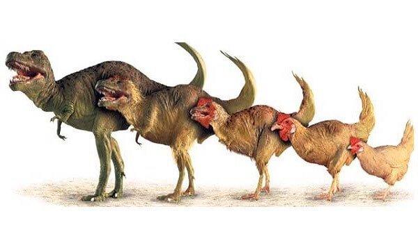 Эволюция динзавра в курицу фото.