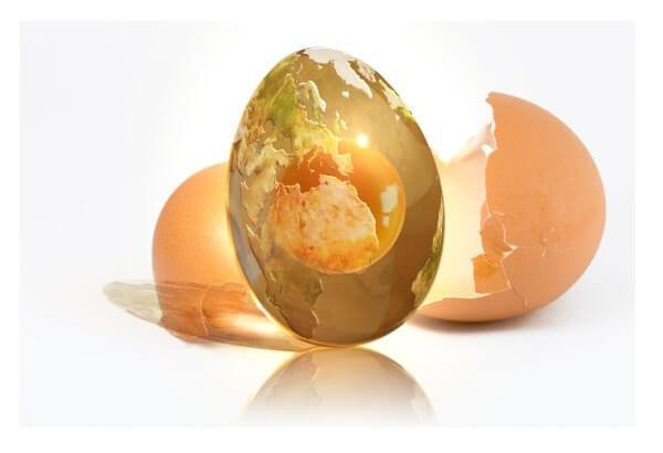 Куриное яйцо - это целая вселенная!