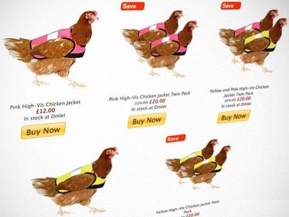 Светоотражающие жилеты для кур в Великобритании.