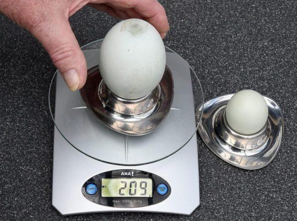 Яйца с двумя желтками.