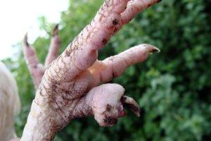 Наросты на лапах у кур — симптомы и лечение кнемидокоптоза