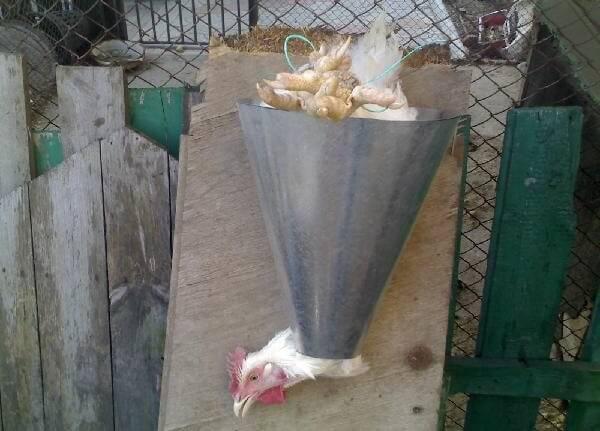 Как зарубить курицу и разделать пошагово.