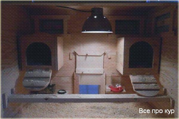 Освещение в курятнике зимой когда включать и выключать?