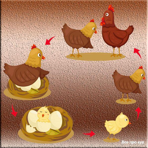 Про яйца и несушек - 65 фактов и один вопрос к вам!