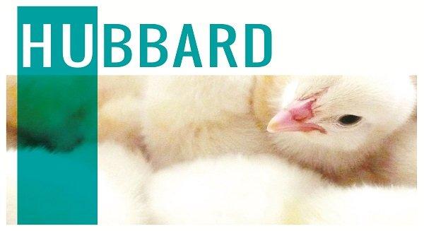 Бройлер Хаббард - описание породы с фото и видео.