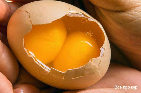 Какие куры несут двухжелтковые яйца?