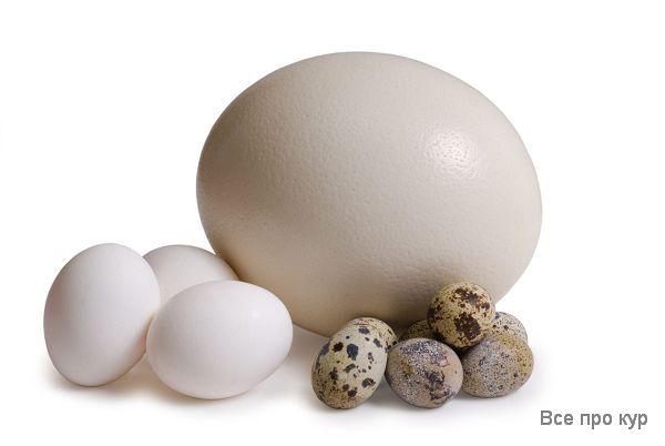 Яйца, которые стоит попробовать - фото, калорийность, состав.