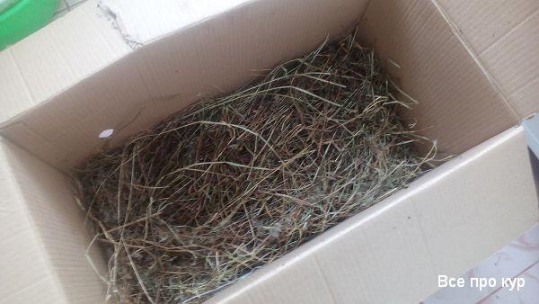 Цыплята в картонной коробке - как обустроить? Фото пошагово.