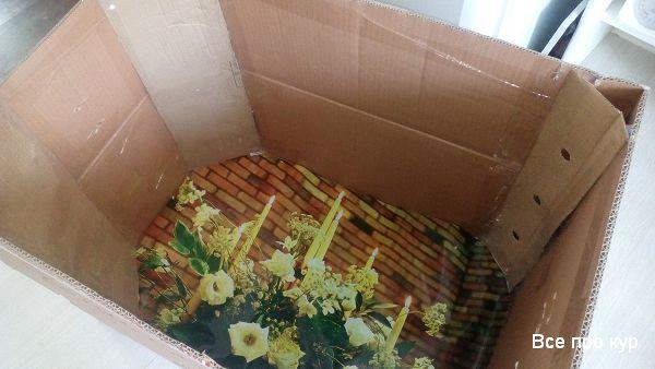 Большая коробка для суточных цыплят - обустройство с фото и видео.