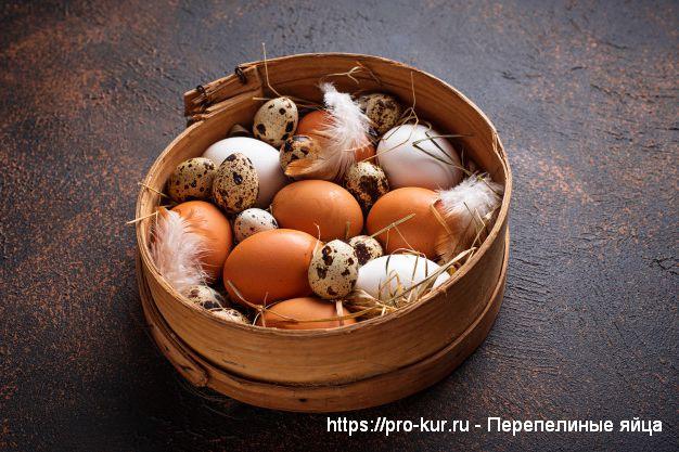 Перепелиные яйца для детей - польза или вред?