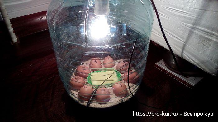 Почему инкубация яиц в домашних условиях очень выгодное дело?