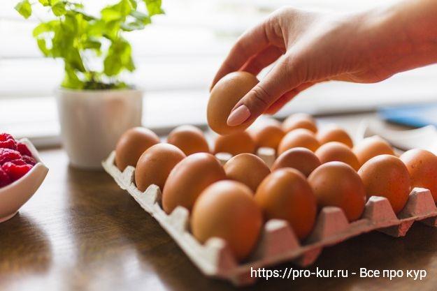 Яйцо из магазина.