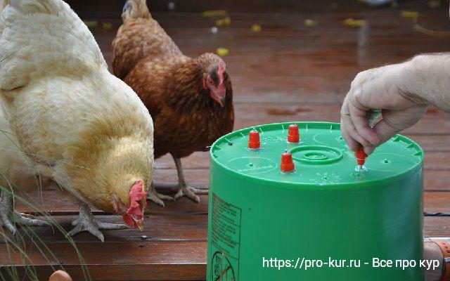 Поилки для цыплят своими руками: виды, изготовление.