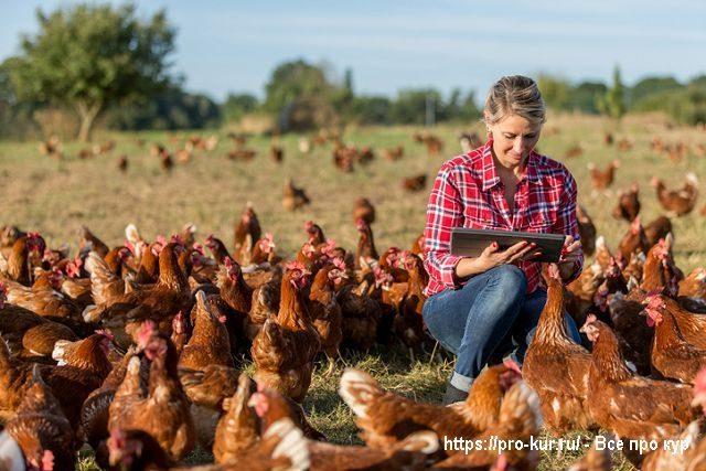 Как организовать домашнюю птицеферму?