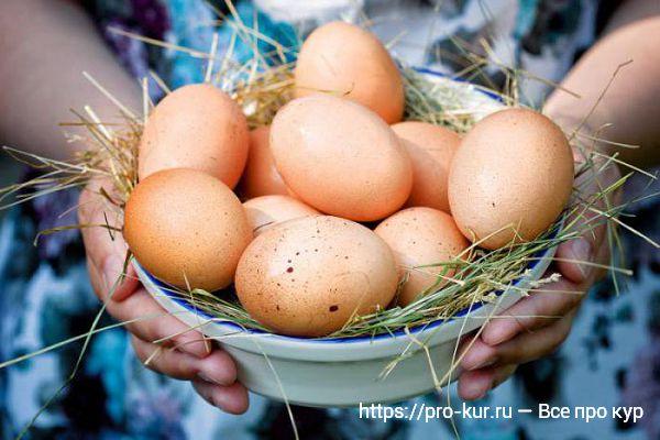 Яйца Котляревских кур несушек.