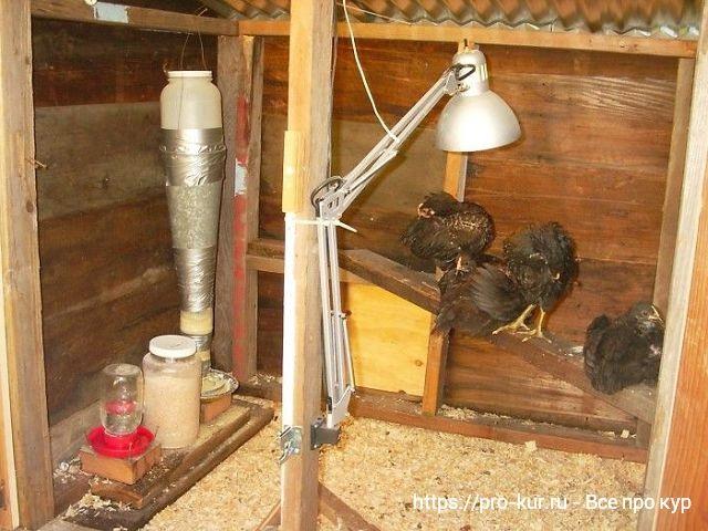 Оборудование курятника и микроклимат для кур несушек.