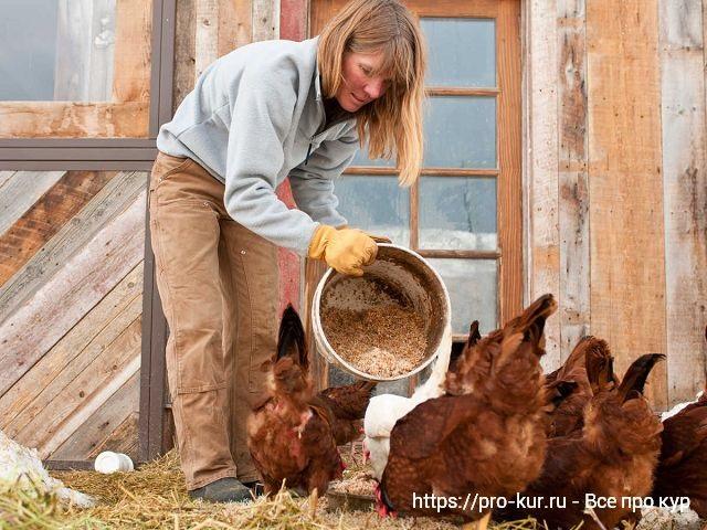 Чем кормить домашних кур?