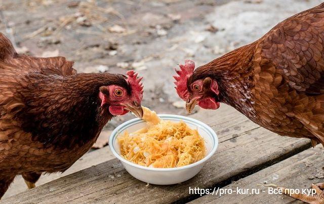 Правильное кормление кур несушек в домашних условиях.