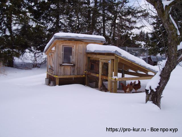 Утепление курятника изнутри на зиму