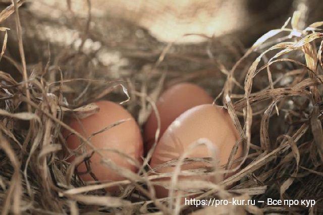 Как повысить и улучшить яйценоскость кур в домашних условиях