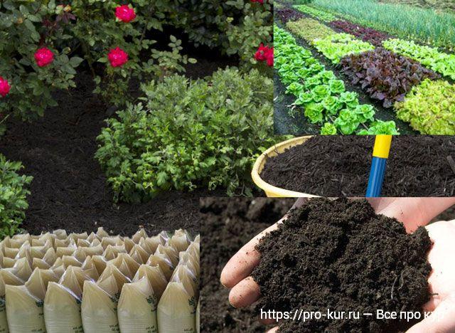Куриный помет как удобрение для сада и огорода.
