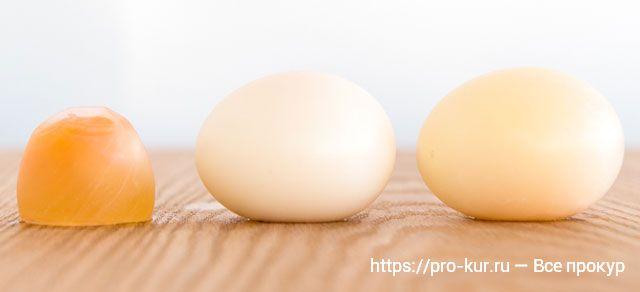 Тонкая скорлупа куриных яиц что делать?