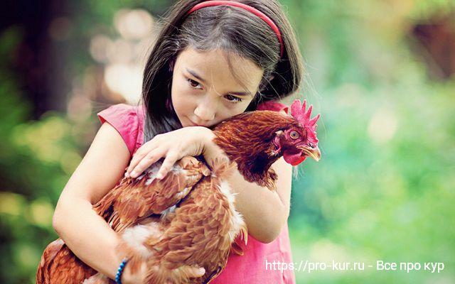 Девочка обнимает несушку.