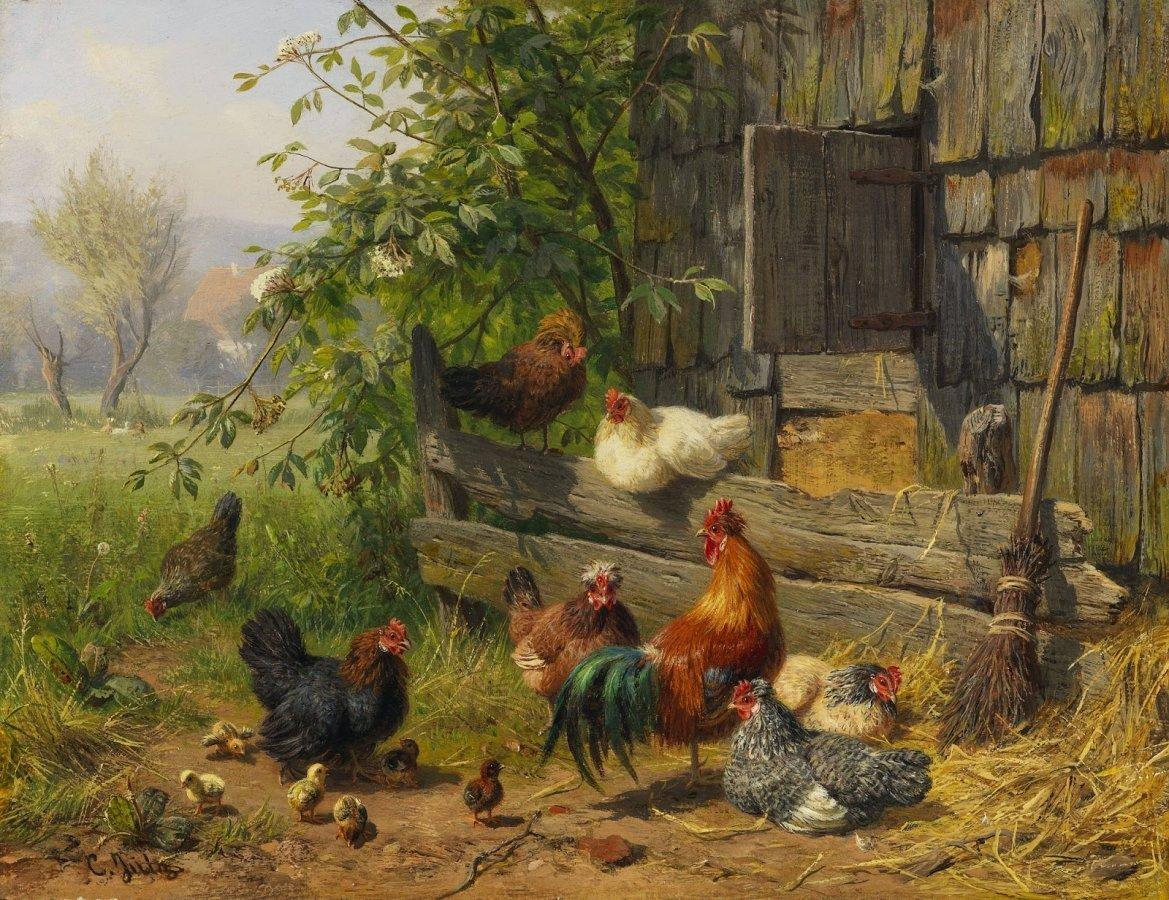 27 подсказок тем, кто планирует завести курочек на даче млм в саду.