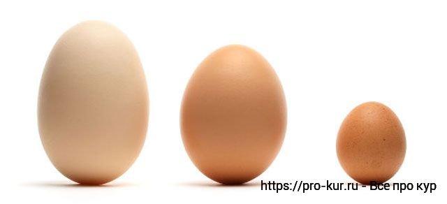 Яйца кур разных размеров.