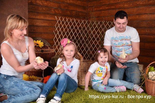 Породы кур для детей в качестве домашних питомцев.